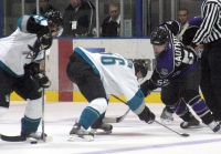Sharks win the face off