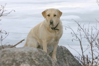 Hali by the frozen lake