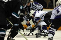 sharks_kings16