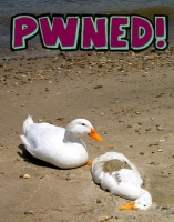 Duck PWNED!