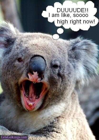 high koala meme - photo #9